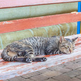 Cat looking and dozy. Royalty Free Stock Images
