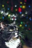Cat Looking en las impresiones Imagen de archivo libre de regalías