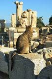 A cat looking at Ephesus ruins Stock Images