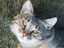 Cat looking into the eyes Royalty Free Stock Images