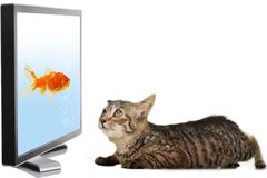 Cat looking at fish Stock Photo
