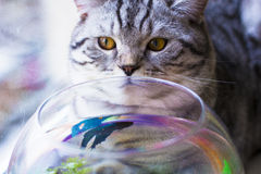 Cat looking on the fish Stock Photo