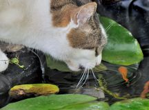 Cat looking for fishes Royalty Free Stock Images