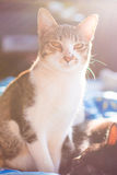 Cat looking and flare light Stock Photography
