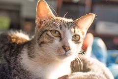 Cat looking and flare light Royalty Free Stock Images