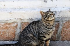 Cat looking forward to finding food stock photo