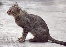 Cat Looking framme royaltyfri fotografi