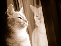 Cat looking for freedom. Domestic cat on window-sill Royalty Free Stock Image
