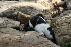 Cat looking into a gap between the rocks stock images