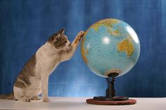 Cat looking at globe Royalty Free Stock Photography