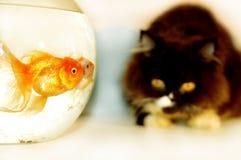 Cat looking at gold fish stock photos