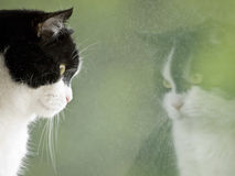 Cat looking at his reflection royalty free stock photography