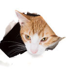 Cat looking through a hole torn in paper Stock Image