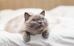 Cat looking with interest Royalty Free Stock Photo