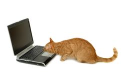 Cat is looking at laptop Royalty Free Stock Image