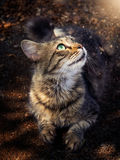 Cat looking at the magic light Stock Photography