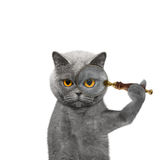Cat looking through a magnifying glass magnifier. Isolated on white Royalty Free Stock Photos