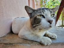 Cat looking. A male street cat resting royalty free stock photography