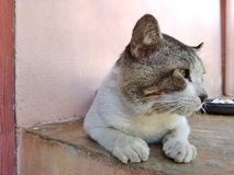 Cat looking. A male street cat resting stock images