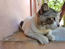 Cat looking. A male street cat resting stock photos