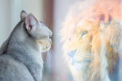 Cat looking at mirror and sees itself as a lion. Self esteem or desire concept