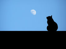 Cat looking at the moon Royalty Free Stock Photos