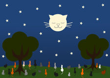 Cat looking moon cat in a beautiful starry night Stock Photos
