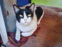 Cat Looking nacional en la cámara fotos de archivo libres de regalías