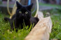 Cat Looking negra en la cámara en la hierba Imágenes de archivo libres de regalías
