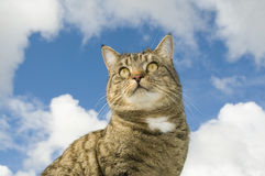 Cat looking out. Mouse shape sky in background Stock Photography