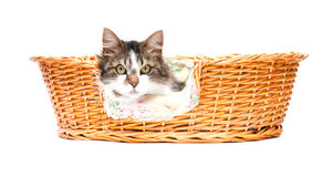 Cat looking out of the basket Royalty Free Stock Images