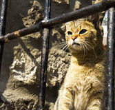 Cat looking out Royalty Free Stock Photography