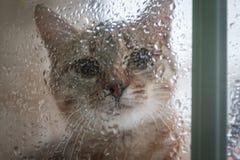 Cat Looking Out das Fenster am Regen Stockbild