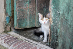 Cat looking out door. Royalty Free Stock Image