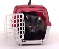 Cat looking out of its travelling cage Stock Photo