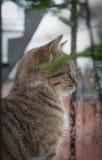 Cat Looking Out la finestra alla pioggia Immagini Stock