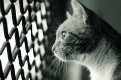 Cat looking out window. Cat looking out of the wire mesh of her cage window royalty free stock image