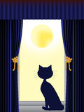 Cat looking out of window Stock Images