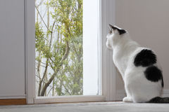 Cat Looking Out a Window. Kitty Cat looking out the window by the front door of a home while sitting on the floor in the foyer during the day royalty free stock photo