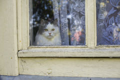 Cat looking out the window.  Royalty Free Stock Photos
