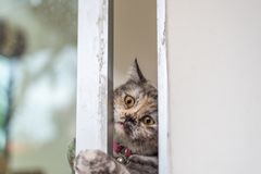 Cat looking out window or door for wait something. Cat is a animal type mammal and pet so cute gray color sitting for relax and looking out a window or door for royalty free stock photos