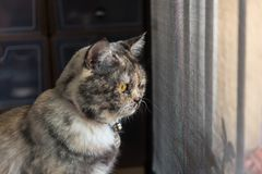 Cat looking out window or door for wait something. Cat is a animal type mammal and pet so cute gray color sitting for relax and looking out a window or door for stock image