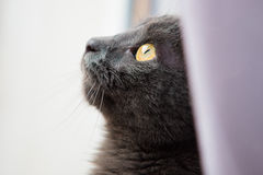 Cat looking out a window Stock Images