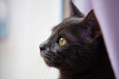 Cat looking out a window Stock Image