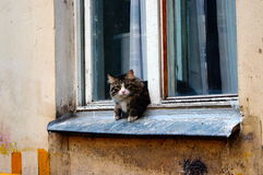 Cat looking out the window Stock Images