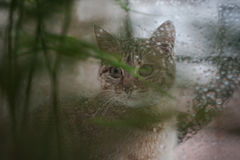 Cat Looking Out the Window at the Rain Stock Photography
