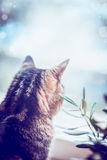 Cat looking out the window , rear view Stock Photography