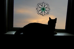 Cat Looking out Window with Stained Glass Stock Photo