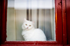 Cat looking out the window Stock Photos