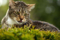 Cat looking outdoor Royalty Free Stock Photos